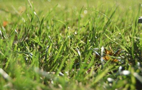 HØYSESONG: Juni og juli er høysesong for gresspollen