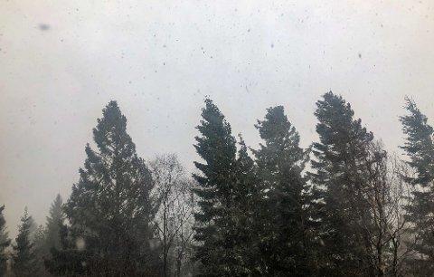 Torsdag blir det mykje vind og snø på Vestlandet, grunna eit lågtrykk.