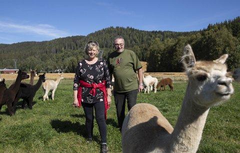I Hurdal driver Audny og Arild Stenbråten Sørflåen Gård med nær 60 alpakkaer. Nærmest er Fiona på fire år. Alle foto: Berit Roald / NTB Tema