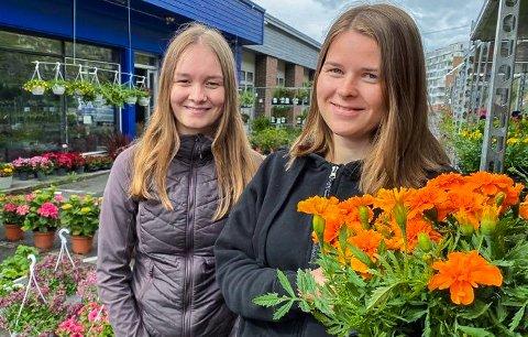REIN: - Tagetes går det veldig mye av i Hammerfest. For det er en blomst reinen ikke liker smaken av, sier sommervikarene Melinda Enlund og Rakel Nilsen.
