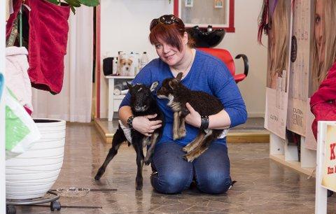 NYE MEDHJELPERE: Iris Lillevik har fått to nye medhjelpere på frisørsalongen i Vadsø. Kopplammene Billebæ og Lillebæ ble ikke godtatt av mødrene sine, og trenger derfor ekstra omsorg.
