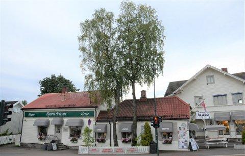 MÅ VEKK: Disse gamle bjørketrærne må vike for at det skal bli plass til sykkeltfelt i Ekebergveien.