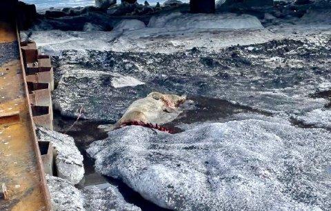 ULOVLIG SKUTT: Denne selen ble skutt av en mann i 40-årene.