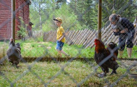 HØNE MED EGG: Patrick Kristoffersen Lie (4) med mamma Hege Kristoffersen for å hilse på dyrene på Glomdalsmuseet.