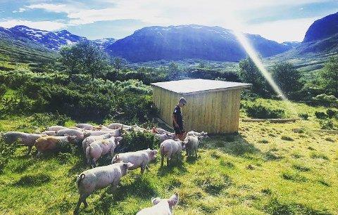 Det gode liv: Raymond gir grisene sine grønnsaker og minimalt med kraftfôr.