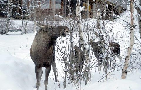 ELG: Fylkesmannen i Nordland opphever et vedtak gjort av Narvik kommune. Arkivfoto: Fritz Hansen