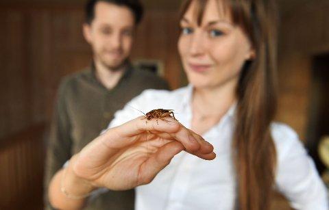 Denne lille rakkeren, sirissen, kan bli storindustri med base i Venabygda. Paret Kine Ariela Egseth og Endre Egseth har planer om å starte med insektsproduksjon på garden Søre Nordbu.