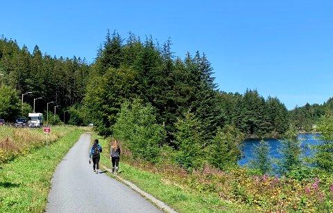 ÅPNES OPP: I dag er det en solid skjerm mellom Skjoldavegen og Eivindsvatnet. Nå er det bestemt at alle trær skal hogges ned.