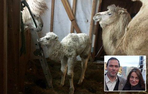 KOM I FEBRUAR: Lille Vilje ble født 12.februar, kan kameleierne Oddveig og Øystein Sætereng fortelle.