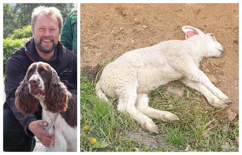 På to dager mistet bonde Ivar Magnus Thoresen i Leirfjord to lam. Et ble påkjørt, mens det andre ble bitt ihjel av hund. Nå ber han folk om å bruke hodet. - Senk farta i beiteområder, og slipp aldri hunden løs. Og er uhellet ute, det minste man kan gjøre er å si fra, sier han.