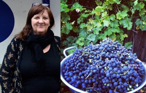 Intet mindre enn åtte kilo druer er årets avling hjemme hos Inger Aguilar på Hallagerbakken.