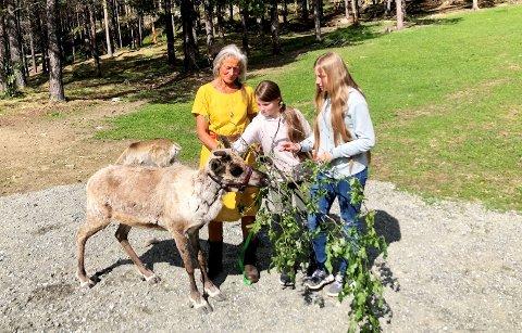 Hege Nordskar held simla Reina medan Melita Nerhagen-Steineide (i midten) og Madeleine Nerhagen-Steineide får helse på. Bakom simla står reinskalven hennar, Rudolf.