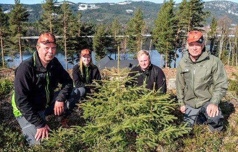 MANGLER ARBEIDSKRAFT: F.v. Terje Roen, Mari Gladhaug, Knut Erik Knutsen Brager og Hallgeir Thorsen i Viken Skog mangler arbeidskraft til planting av 1,1 million skogplanter denne våren.