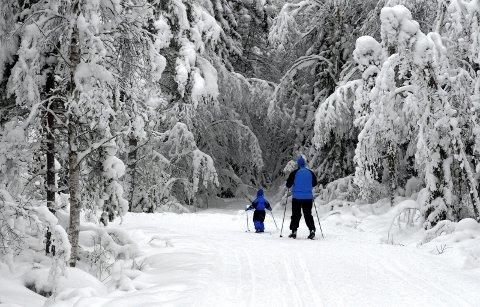 SØKER OM SKILTING: Elverum Turforening har søkt om støtte til å skilte skiløypene i Elverum bedre.