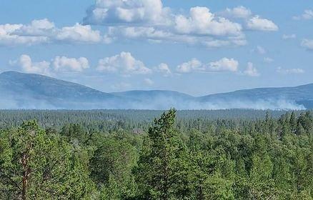 Over tretoppene stiger røyken fra skogbrannen i Femundsmarka nasjonalpark