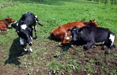 Disse kuene lever et godt liv, men det er ikke alle dyr som har det på samme måten.