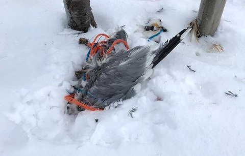 DØDE: – Det er trist at dyra må lide på grunn av vårt søppel, mener Ingunn Gravdal.