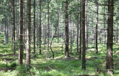 Oslo  20160705. Skog. Skogen vokser tett enkelte steder. Her fra Hurumsmarka i Buskerud. Kyststien snor seg gjennom skogen tett til Oslofjorden. Foto: Terje Pedersen / NTB scanpix