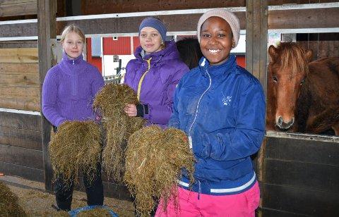 Mat må hestene ha: Thale , Marte og Sarah  med høyet. Den til høyre ser ut til å ha lyst på noen strå.