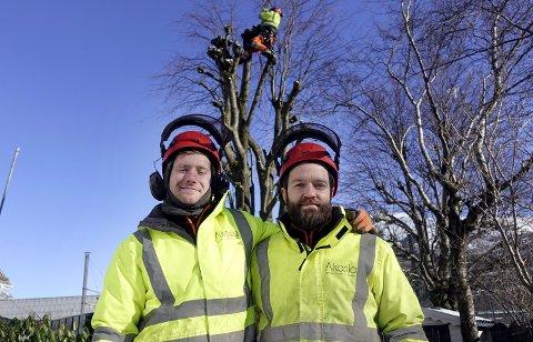 Holder varmen: David Hansen (f.v.), Per-Anders Hammarström trives i            kulden. I bakgrunnen jobber kollegaene med kolling av lindetrær for å hindre at de blir for store.FOTO: MATS MYREDAL