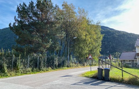 SØKER OM FELLING: Prestebøen burettslag i Førde søker om å få bjørketre som står til venstre i bildet, fjerna.