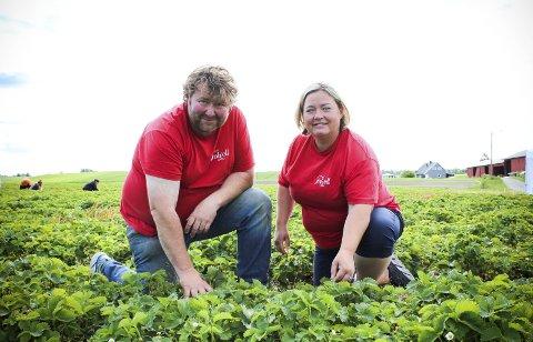Hektisk tid: Juli er en hektisk tid for Martin og Elin Skovseth på Folvell gård, som nå ikke bare produserer jordbær, men serverer den hjemme i gårdsbutikken. ALLE FOTO: ELISABETH JOHNSEN, RB