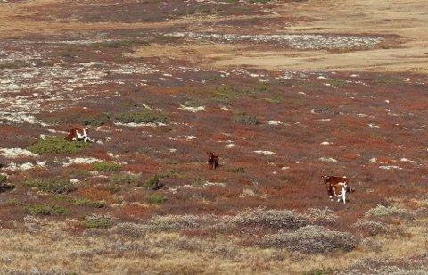 Tre av disse er savnet i området Vuludalen. Dette er et bilde en turist tok ved Eldåkampen 30. september.