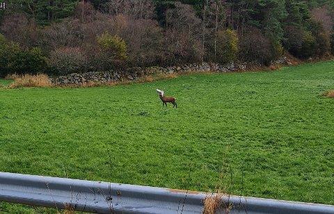 PLAST: Jan Anvedsen tok bilde av hjorten mandag morgen. – Det var trist å se, sier han.