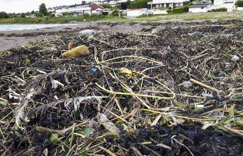 Ille: Havet forsøples, bildet viser sprengtråder i plast som har forsøplet en rekke strender i mossedistriktet.