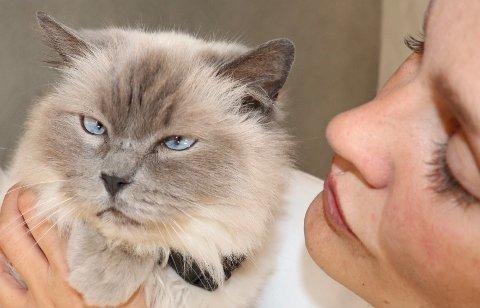 """FORSVANT: Uten å legge igjen så mye som et spor forsvant katten til Elin, Jenny, i fire måneder. Hun tror det kan være en ensom person som har """"tatt over"""" katten hennes i fire måneder."""