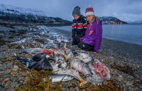 TRIST SKUE: Vilde og Signe Tønnesen syntes også det var trist å se de mange døde måsene på stranda i Bellvika.