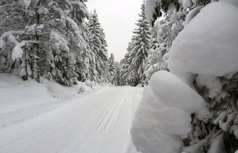 God tur: Uansett om du går på ski eller på beina. Nyt turen og ha medlidenhet med de surmagede blant oss.