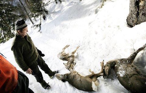 Dør av sult: Rådyr kan dø av sult og utmattelse ved store snømengder og streng kulde. Her fra en situasjon i Hvarnes i 2006 med viltnemndas Finn Roligheten.