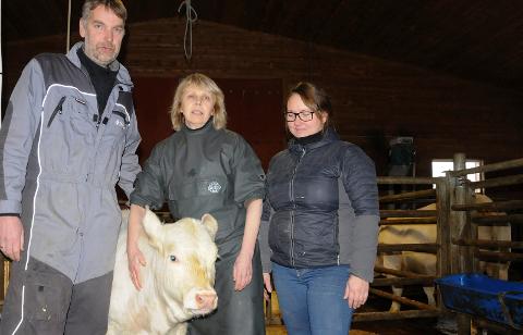 PILOTPROSJEKT: Veterinær Grete Steihaug i storfefjøset til Per Nesmoen Rognstad og Eva Iren Furuli på Tynset.