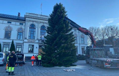 NYTT HJEM: Treet har stått i hagen til Fokke F. Van der Meer (85) siden 1979. Nå har det fått et nytt hjem på Rådhusplassen.