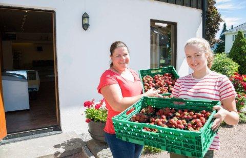 Ingvild Collet-Hanssen og Caroline Berggaard har fersk jordbær fra egne jorder på Nordre Sørum gård i Hole.