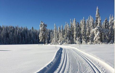 VINTERPARADIS: En liten tur unna Tønsberg ligger denne snøidyllen og venter på deg. Vestskauen i Sande ligger 500 meter over havet og kan by på mye snø. Søndag er det også varslet sol.