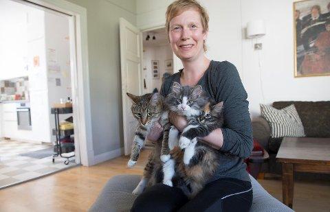 Åsne Halskau lot katten deres Lillith (t.v.) få kattunger. Da de skulle gis bort, var responsen overveldende, forteller hun.