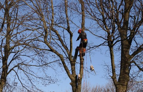 Flotte Randaberg: Selskapet har forandret driften, skiftet navn i fjor, og ønsker å øke kundemassen lokalt. Her er Trygve Dyngeland på et oppdrag med å tynne ut trær.