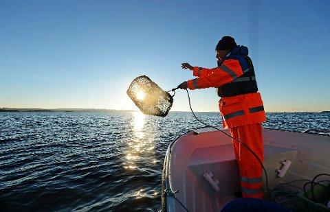 Bedring i horisonten: Onsdag er solen tilbake i distriktet igjen, noe Kurt Allan Hansen hos Fjorfisk vil få fart på hummerfisket.