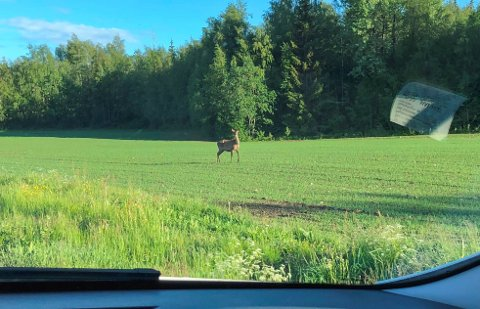 IKKE SÅ VANLIG: Dyret er ikke så vanlig, men blir stadig mer utbredt i vårt område.