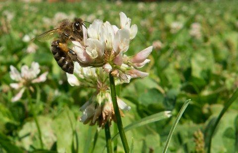 Neonikotinoider kan ha en «utilsiktet prevensjonseffekt» på insekter