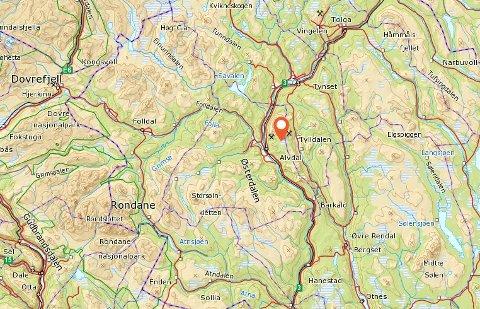 Bjørnen ble skutt øst for Glomma, sør for Tron.