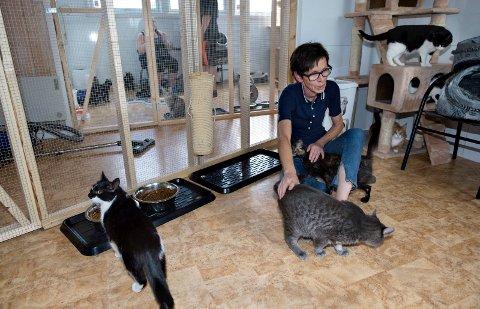 KATTER: Inger Malerstuen og Dyrebeskyttelsen Gjøvik Toten kan konsentrere seg om å hjelpe hjemløse katter. (ARKIVBILDE)