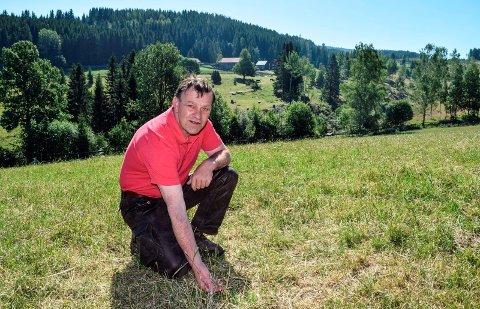 - Her vokser det ikke gras i det hele tatt om dagen, konstaterer storfeprodusent Per Idar Vingebakken i Øvre Skreien. Han frykter fôrkrisa skal føre til massiv nedslakting til høsten.