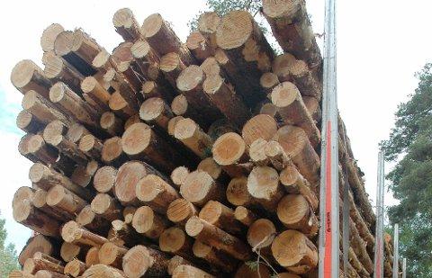 TØMMER: Rekordartede mengder med tømmer ble tatt ut fra Indre Østfold-skogene i fjor. Til landets beste priser. ARKIVFOTO