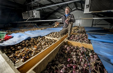 Løk i lange baner: Karlshus-bonde Are Holmen lagrer 250 tonn rød og gul løk som ble høstet på gården her i løktørken. – Å være bonde i Råde er det beste som er. Vi er mange, og det å ha et kollegium er veldig verdifullt, sier Holmen.