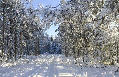 Siljedalen: Flotte skispor, nok snø og blå himmel. Hva mer kan man forlange en utypisk vinterdag i Halden?Foto: Morten Paulsen