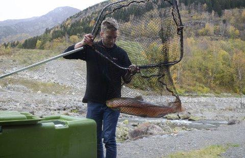 Øyna: Andreas Forstrøm i Odda Jakt- og fiskelag med en ekte Opo-laks på ca. 10 kilo. Deretter ble fisken plassert oppi karet på lasteplanet, og kjørt til genbanken i Sima.