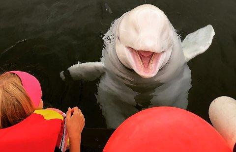 HENSYN TIL HVALDIMIR: Flere har den siste tiden etterlyst informasjon om hvor Hvaldimir befinner seg. Det vil ikke Norwegian Orca Survey gå ut med, av hensyn til hvalen.